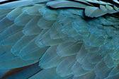 Close-up of Blue-and-yellow Macaw's feathers, Ara ararauna — Stock Photo