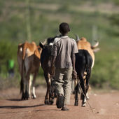 Rear view of boy with herd of cattle, Serengeti National Park — Stock Photo