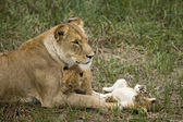 Lioness and her cubs in Serengeti, Tanzania, Africa — Stock Photo