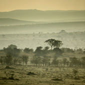 Africa landscape Serengeti National Park, Serengeti, Tanzania — Stock Photo