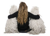 Rear view of two White Corded standard Poodles and a girl with dreadlocks sitting in front of white background — Stock Photo