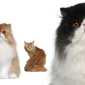 Portrait of group of cats in front of white background — Stock Photo