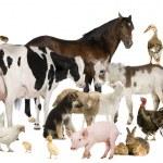 paard — Stockfoto #10891344