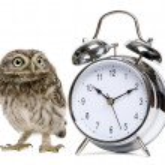 Маленькая сова, 50 дней от роду, athene noctua — Стоковое фото