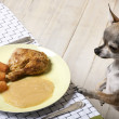 Chihuahua looking at food on plate at dinner table — Stock Photo #10892934