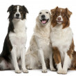 Group of three mixed-breed dogs in front of white background — Stock Photo