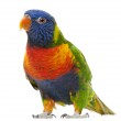 Rainbow Lorikeet, Trichoglossus haematodus, 3 years old, standing in front of white background — Stock Photo #10894698