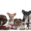 Group of dogs sitting in front of white background — Stock Photo