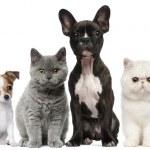 Groupe de chiens et de chats en face de fond blanc — Photo