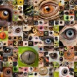 Montage of animal eyes - Stock Photo