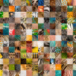 Stock Photo: Patchwork of 196 animals and humskin