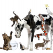 Group of pets together in front of white background — Stock Photo #10897288