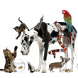 Group of pets together in front of white background — Stock Photo #10897290