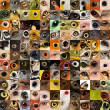 Patchwork of 121 animal and human eyes - Stock Photo