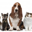 Group of cats and dogs in front of white background — Stock Photo #10897393