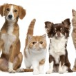Photo: Group of cats and dogs in front of white background