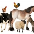 Variety of farm animals in front of white background — Stock Photo