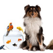 Group of pets sitting in front of white background — Stock Photo #10898965