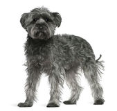 Mixed-breed dog, 4 years old, standing in front of white background — Stock Photo
