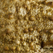 Close-up of frog skin — Stock Photo