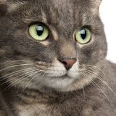 Close-up of mixed breed cat, 3 years old, in front of white background — Stock Photo