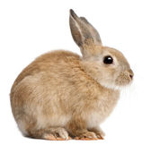Bunny rabbit in front of white background — Stock Photo