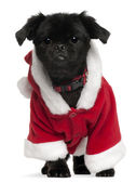 Mixed-breed dog wearing Santa outfit, 11 years old, standing in front of white background — Foto de Stock