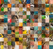 Patchwork of 196 animals and human skin — Stock Photo