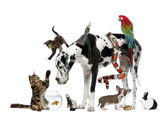 Group of pets together in front of white background — Stock Photo