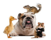 Group of pets in front of white background — Stock Photo