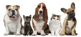 Group of cats and dogs in front of white background — Stock Photo