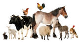 Variety of farm animals in front of white background — Foto Stock