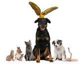 Portrait of group of pets in front of white background — Stock Photo