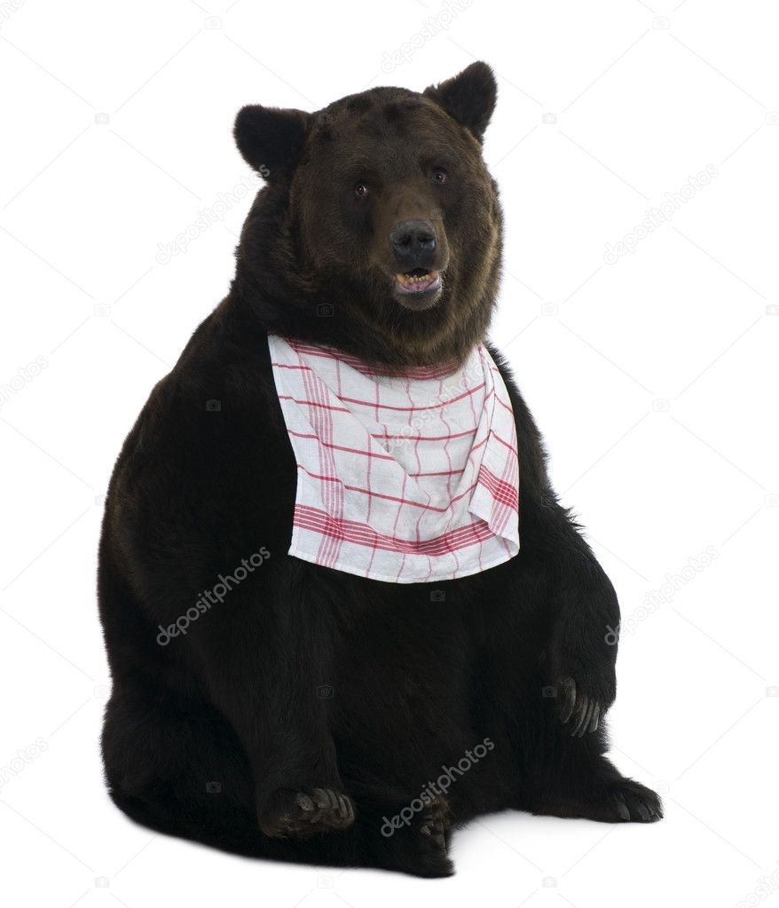 Siberian Brown Bear, 12 years old, against white background — Stock Photo #10890366