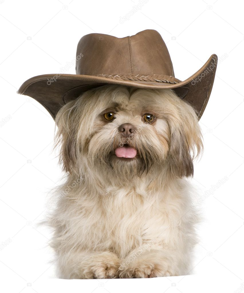 Shih Tzu, 3 years old, wearing hat against white background — Stock Photo #10890871