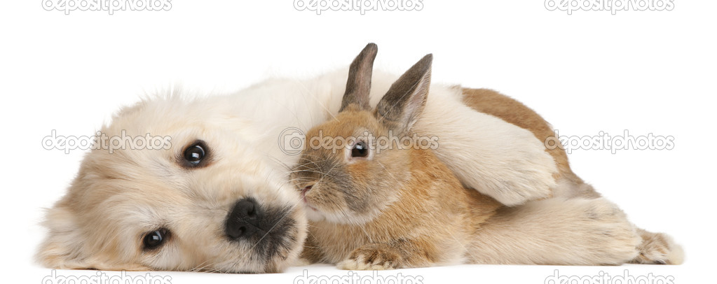Dog And Rabbit Pet Compatibility
