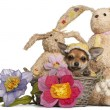 Chihuahua puppy in Easter basket with flowers and stuffed animal - Stock Photo
