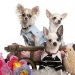 Three Chihuahuas dressed up and in dog bed wagon near flowers and stuffed chicken in front of white background — Stock Photo