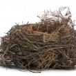 Focus stacking of a Nest of Common Blackbird in front of white background — Foto Stock