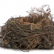Focus stacking of a Nest of Common Blackbird in front of white background — Stock Photo