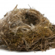Focus stacking of a Nest of tit in front of white background — Stock Photo