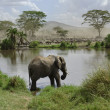 Elephant in river in Serengeti National Park, Tanzania, Africa — Stock Photo