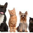 Royalty-Free Stock Photo: Group of cats and dogs sitting in front of white background