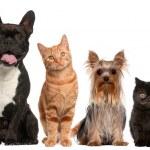skupina z koček a psů před bílým pozadím — Stock fotografie