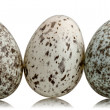 Stock Photo: Three House Sparrow eggs, Passer domesticus, in front of white background