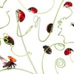 Seven-spot ladybird or seven-spot ladybug on Larger Bindweed, Co — Stock Photo