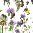 Female worker bees composition, Anthophora plumipes, in front of — Stock Photo #10904943