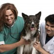 Vet and intern examining a border collie with a stethoscope in front of white background — Stock Photo #10906645