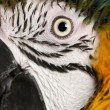 Stock Photo: Portrait of Blue and Yellow Macaw, ArArarauna, eye