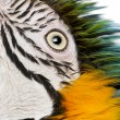 Close up of Blue and Yellow Macaw, Ara Ararauna, eye — Stock Photo